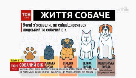 Ученые вывели более точную формулу перевода собачьих лет в человеческие