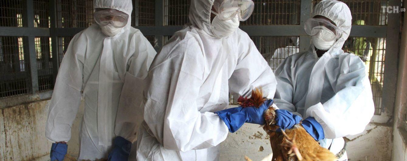 У Польщі зафіксували нові спалахи пташиного грипу