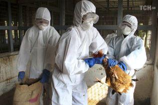 В Украине впервые за последние три года зафиксировали массовые случаи птичьего гриппа