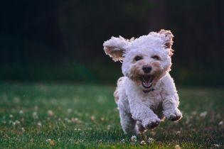 Скільки людських років собаці: українські лікарі прокоментували розроблену в США формулу