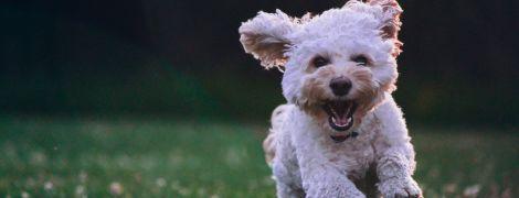 Сколько человеческих лет собаке: украинские врачи прокомментировали разработанную в США формулу
