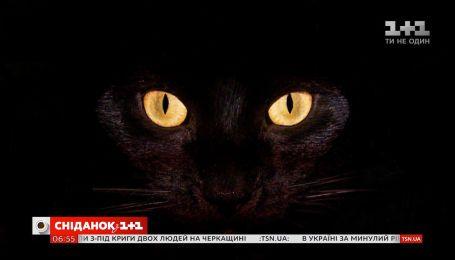 """""""Диявольський"""" гуанін: чому очі котів світяться в темряві"""