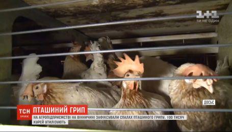 В Винницкой области утилизируют 100 тысяч кур из-за вспышки птичьего гриппа