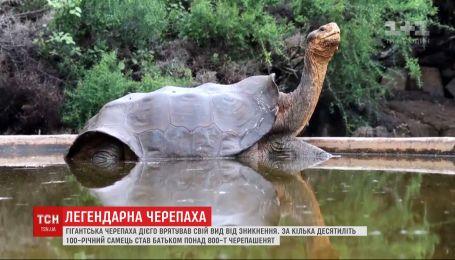 Возвращение отца-героя: на Галапагосах готовятся встречать легендарную черепаху Диего
