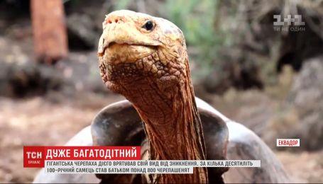 Урятував свій вид від зникнення: славетна черепаха Дієго повертається на Галапагоси