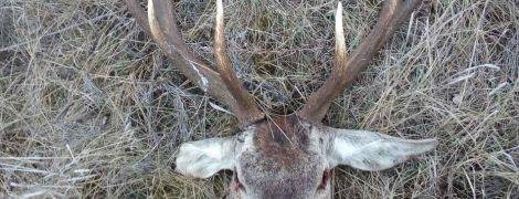 В президентской резиденции под Киевом охотники убивают краснокнижных зверей, а туши едят собаки - эколог