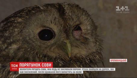 Волонтеры спасают совенка, которого чуть не заклевали вороны в Кропивницком