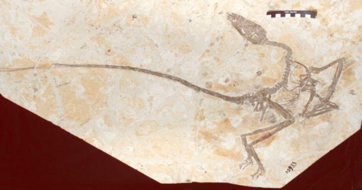 """У Китаї вчені знайшли """"дракона, що танцює"""". Він може пролити світло на одну із загадок еволюції"""