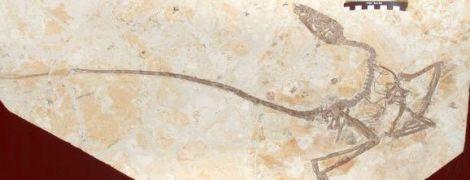 """В Китае ученые нашли """"танцующего дракона"""". Он может пролить свет на одну из загадок эволюции"""
