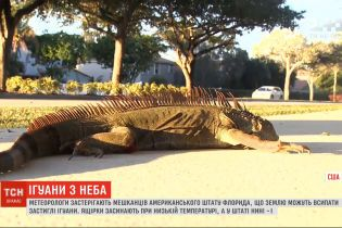 Из-за рекордно низкой температуры во Флориде землю могут покрыть застывшие ящерицы