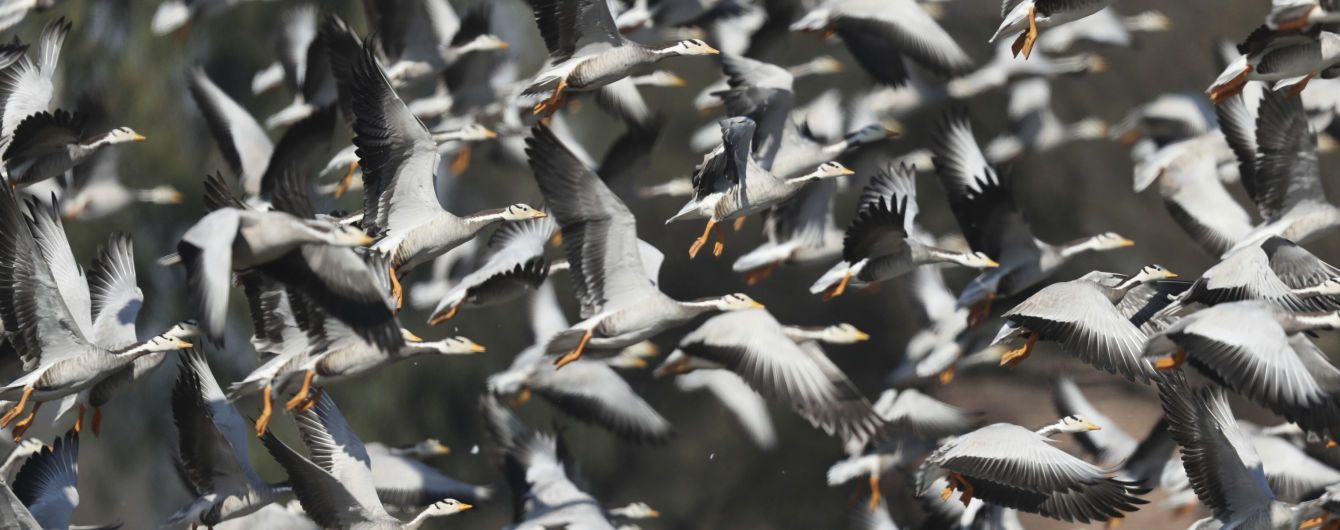 На юге Украины в этом году зимуют птицы, которые обычно в это время в Африке