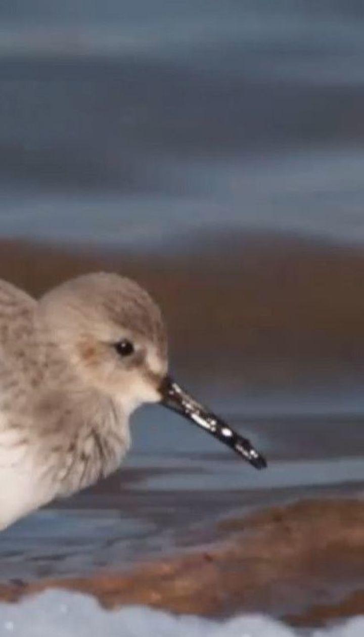 На Одещині через аномальне тепло птахи почали гніздитися, а риба готується до нересту