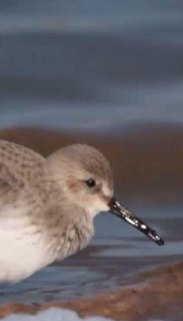 В Одесской области из-за аномального тепла птицы начали гнездиться, а рыба готовится к нересту
