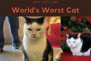 """""""Найгірша кішка у світі"""" шукає дім: американський притулок для тварин розмістив оголошення"""