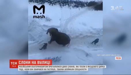 Двое слонов бегали и играли в снегу в российском Екатеринбурге