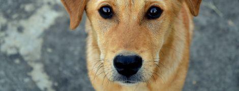 У Вінницькій області чоловік вбив безпритульного пса та нагодував ним свою родину
