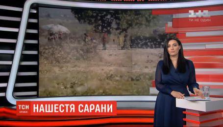 Африка страдает от нашествия саранчи