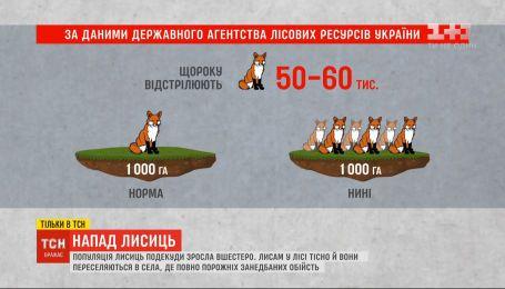 Лисиці знищили свійську птицю в господарів у селі на Черкащині