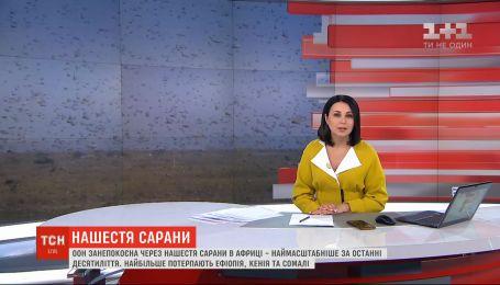 ООН обеспокоена из-за нашествия саранчи в Африке