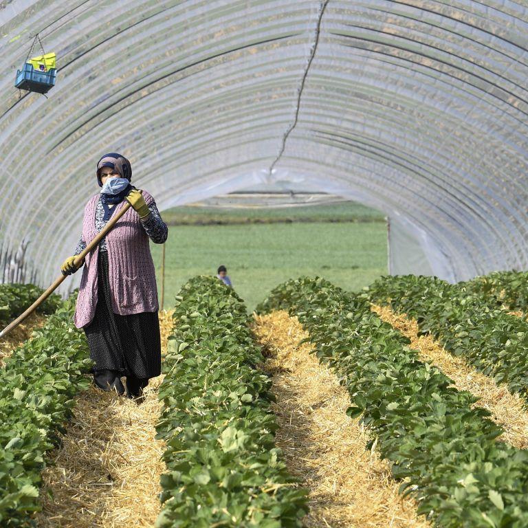 Чехия продлила срок действия разрешений на трудоустройство для иностранцев - есть условие