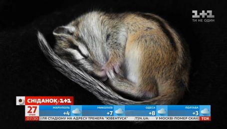 Что происходит с животными во время зимней спячки, и почему она необходима - Поп-наука
