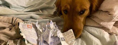 Собака съела паспорт тайванки и спасла ее от коронавируса
