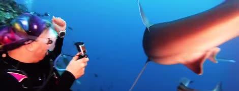 Дайвер голыми руками стукнула по носу агрессивной акулы и напугала ее