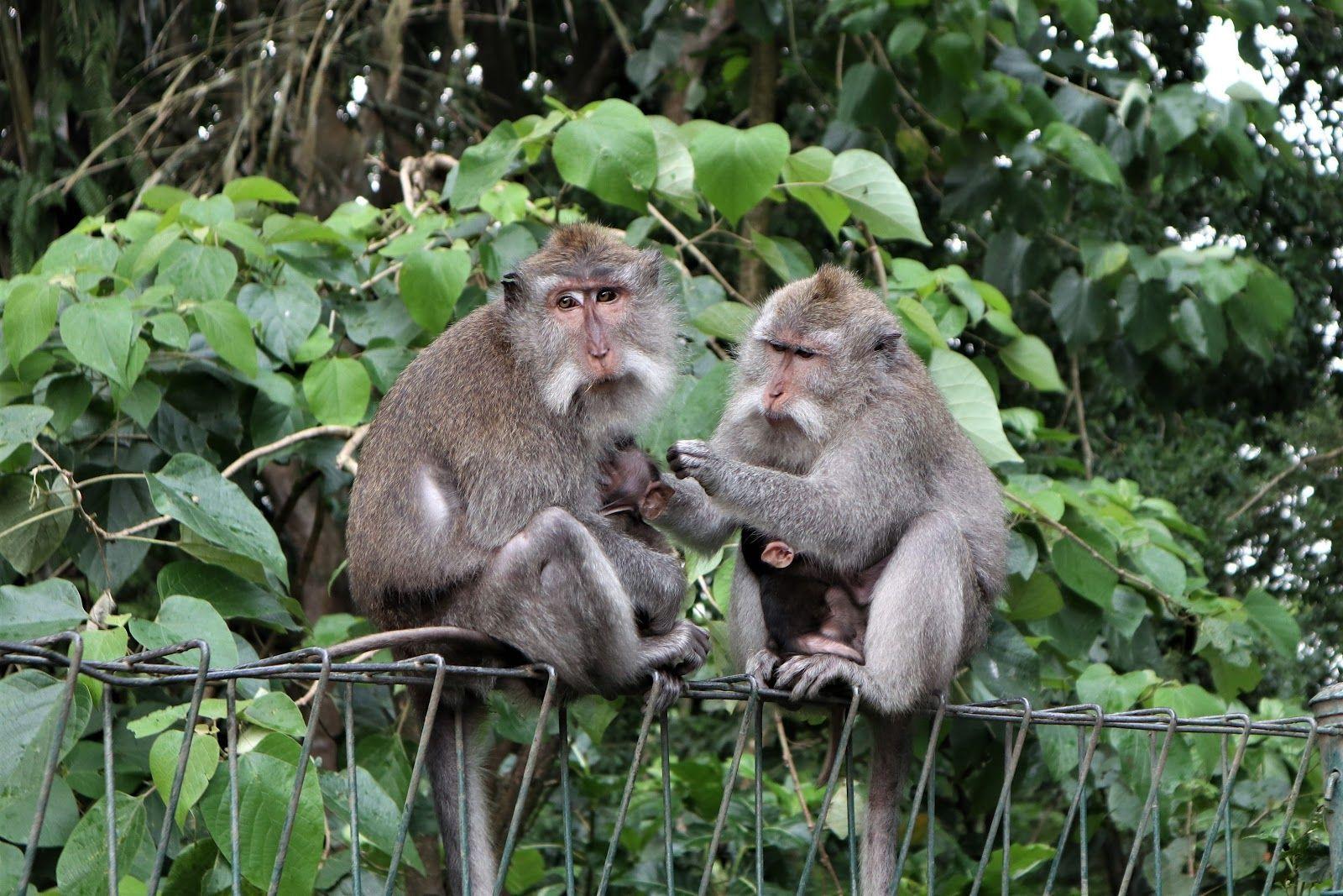 Індонезія, Балі, для блогів_2