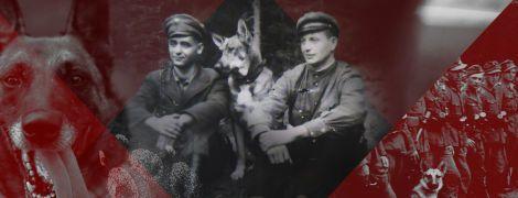 Собаки на службе УПА: как четырехлапые защищали украинскую государственность