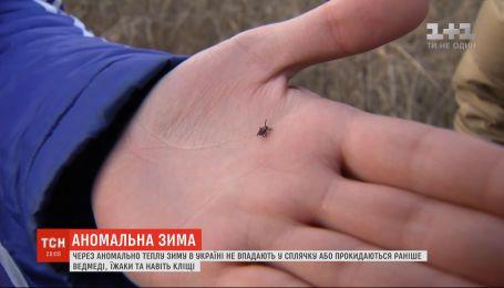 Из-за аномально теплой зимы в Украине просыпаются раньше медведи, ежи и даже клещи