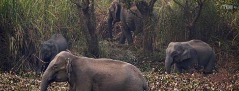 Эксперты нашли причину таинственной гибели сотен слонов в Ботсване