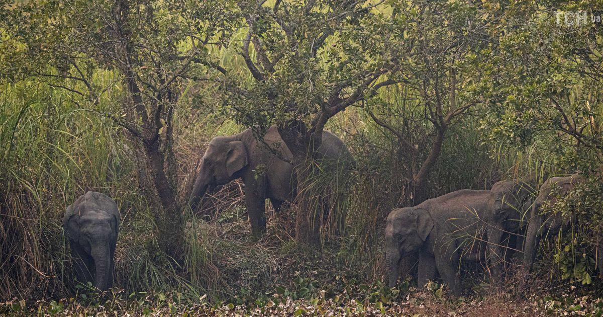 В поисках лучшей жизни. В Индии дикие слоны вынуждены покидать свои дома из-за нехватки еды