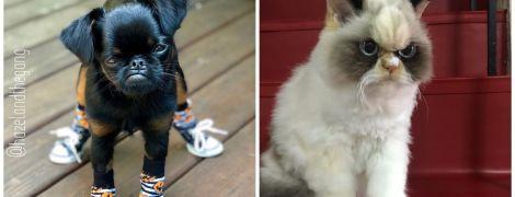 """Недовольные пушистики: Сеть завоевывают """"самые сердитые"""" кот и пес"""