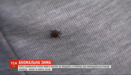 Из-за аномально теплой зимы в Украине проснулись клещи