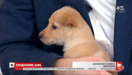 Одномесячный щенок ищет заботливых хозяев