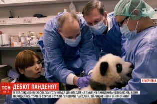 У Берлінському зоопарку відбудеться дебют 5-місячних панденят-близнюків