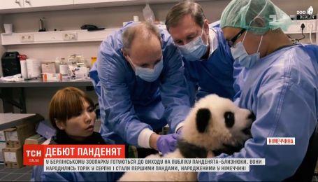 В Берлинском зоопарке состоится дебют 5-месячных малышов панд-близнецов