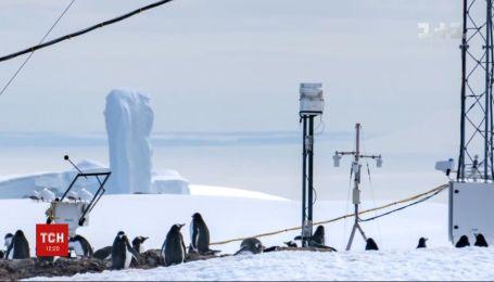 """ТСН анонсує новий спецпроект """"Скарби Антарктиди"""""""
