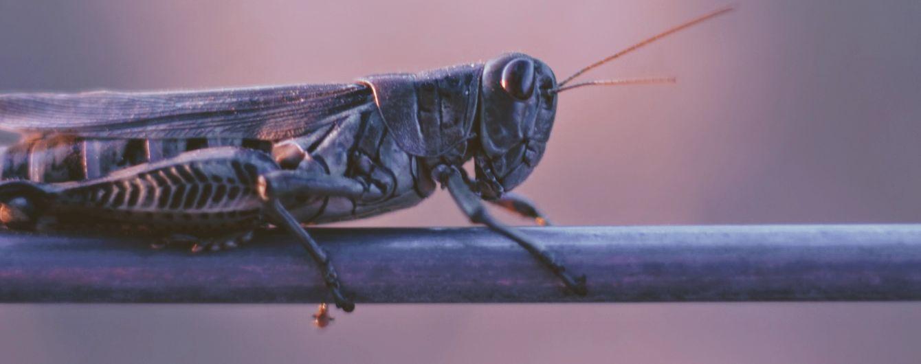 В Пакистане объявили чрезвычайное положение из-за опасных насекомых