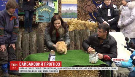 Харківський бабак Тимко навіщував ранню весну