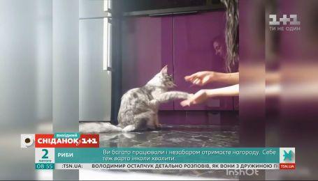 """Забавные видео мурчиков и пушистиков от зрителей """"Сниданка с 1+1"""""""