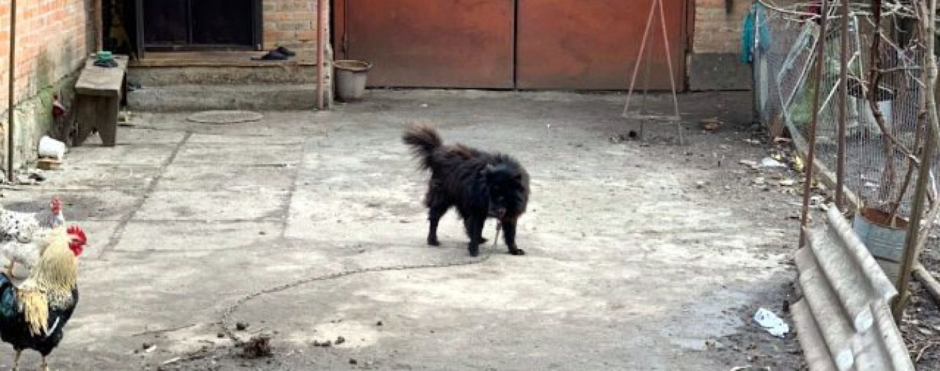 """З'явилися фото """"елітного пса"""", якого пенсіонерці порадив продати нардеп Брагар, щоб сплатити за газ"""