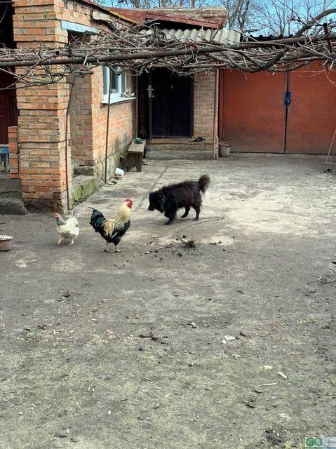 елітний собака Шарик
