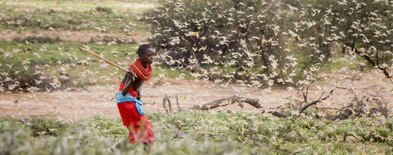 Саранча атаковала Сомали. В стране объявили чрезвычайную ситуацию