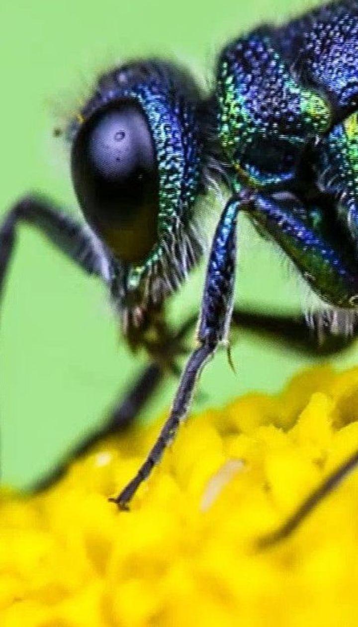 Чому у комах кінцівки еволюціонували у щелепи – популярна наука