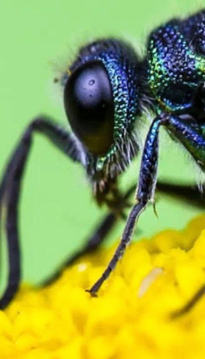 Почему у насекомых конечности эволюционировали в челюсти – популярная наука