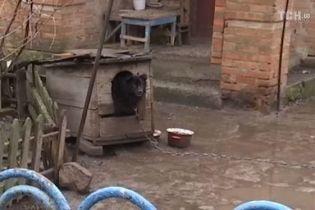 Депутат Брагар пообіцяв приїхати до пенсіонерки, якій порадив продати собаку