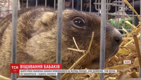 Весна близько: львівські бабаки прокинулись на місяць раніше, ніж зазвичай