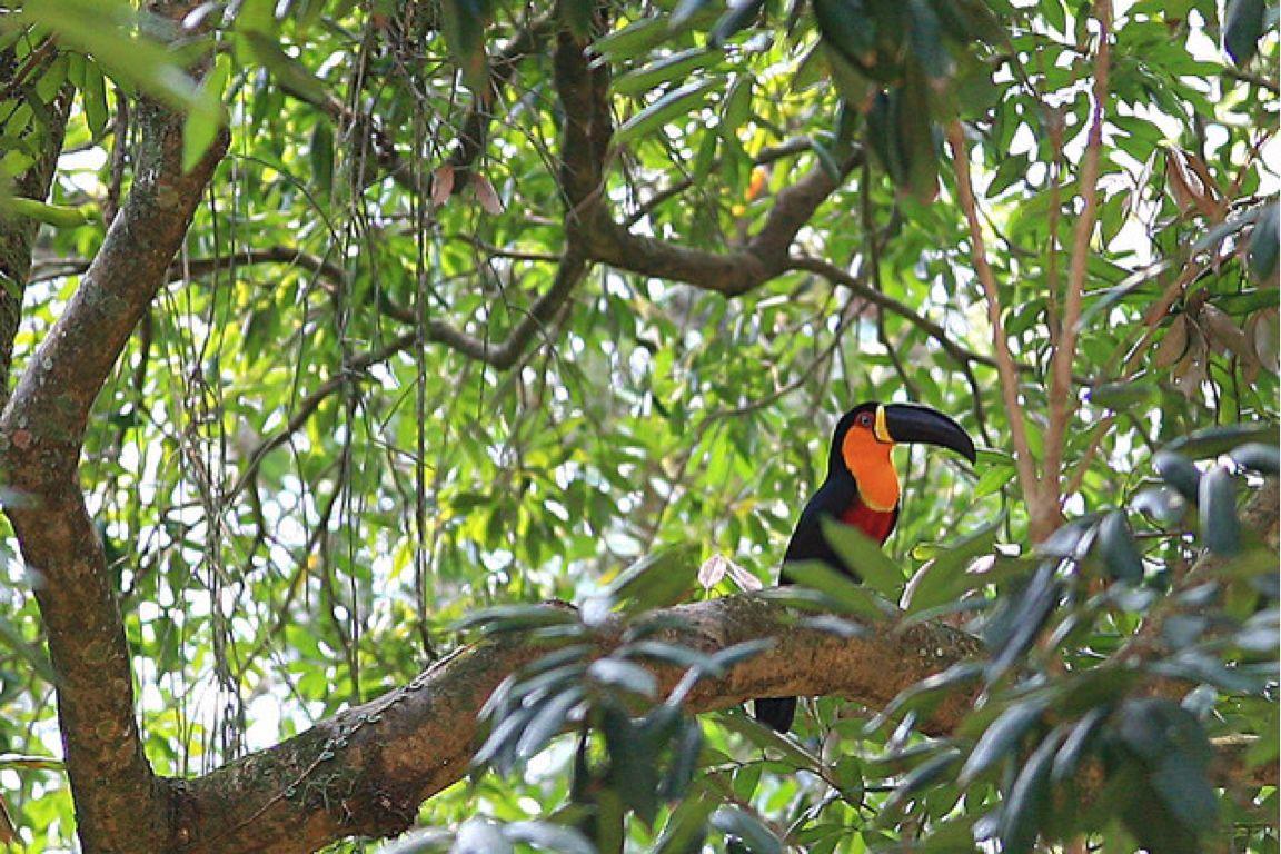 Тропічні ліси Амазонії (Бразилія).