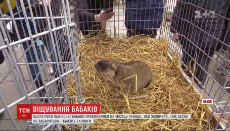 Прогнози бабаків: коли до України прийде весна
